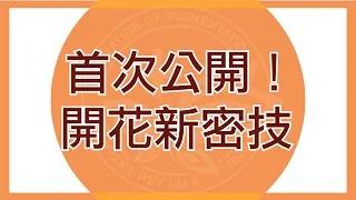 【美睫教學】PEA首次公開!開花新密技
